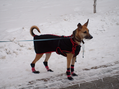 Dog boots to prevent snow and ice ball formation and protect from ... 3f0f87369abc